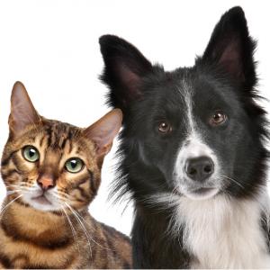 Honden & Katten